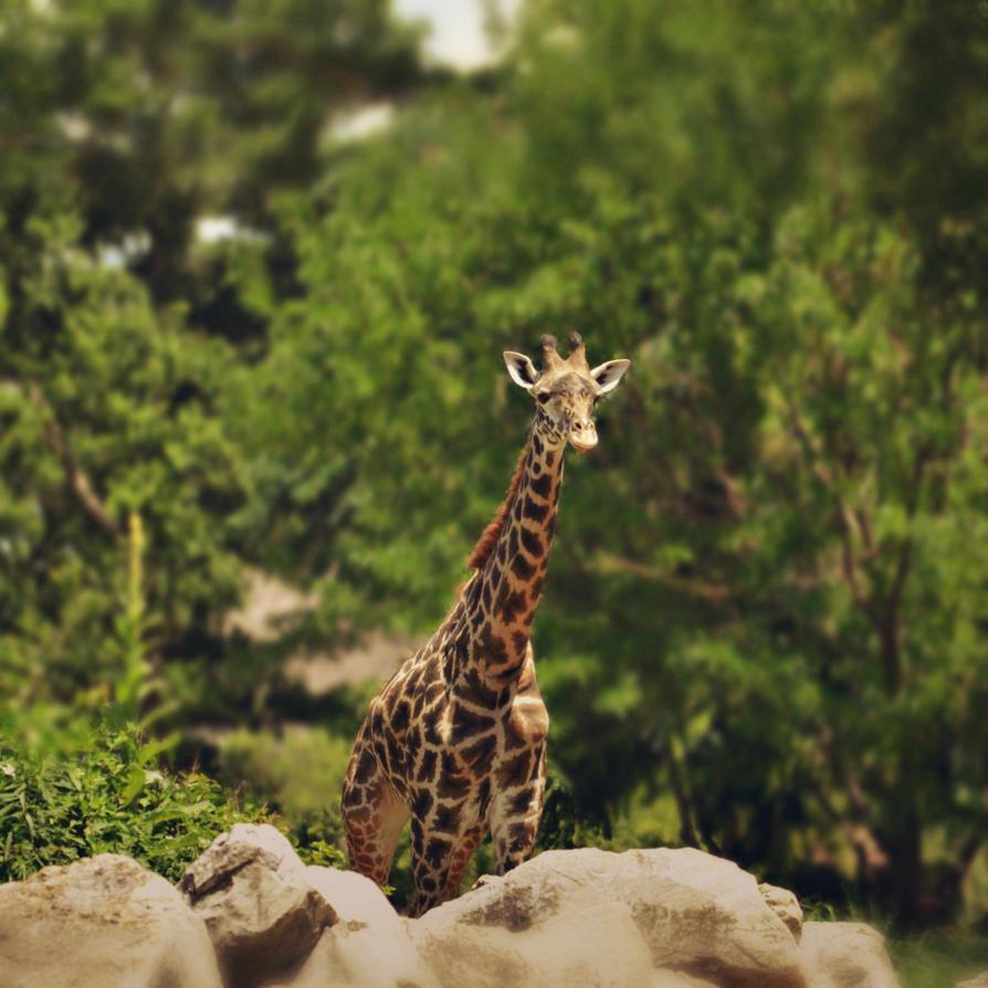 Giraffe'N by suezn