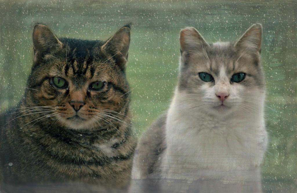 My City Kitties by suezn