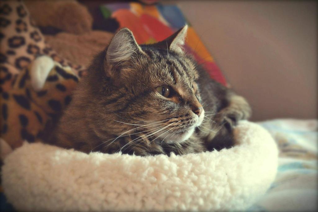 Cat Dreamn' by suezn