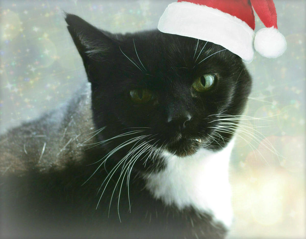 I Sits For Santa by suezn