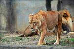 The Lioness Awakens