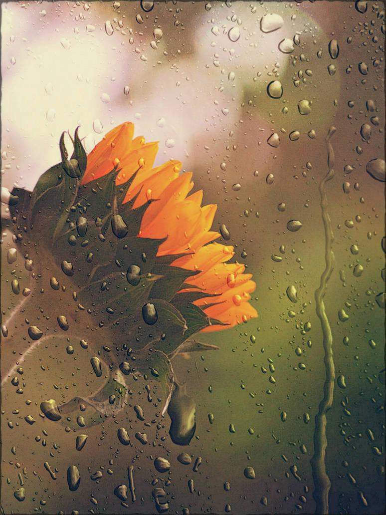 Sunny Rain