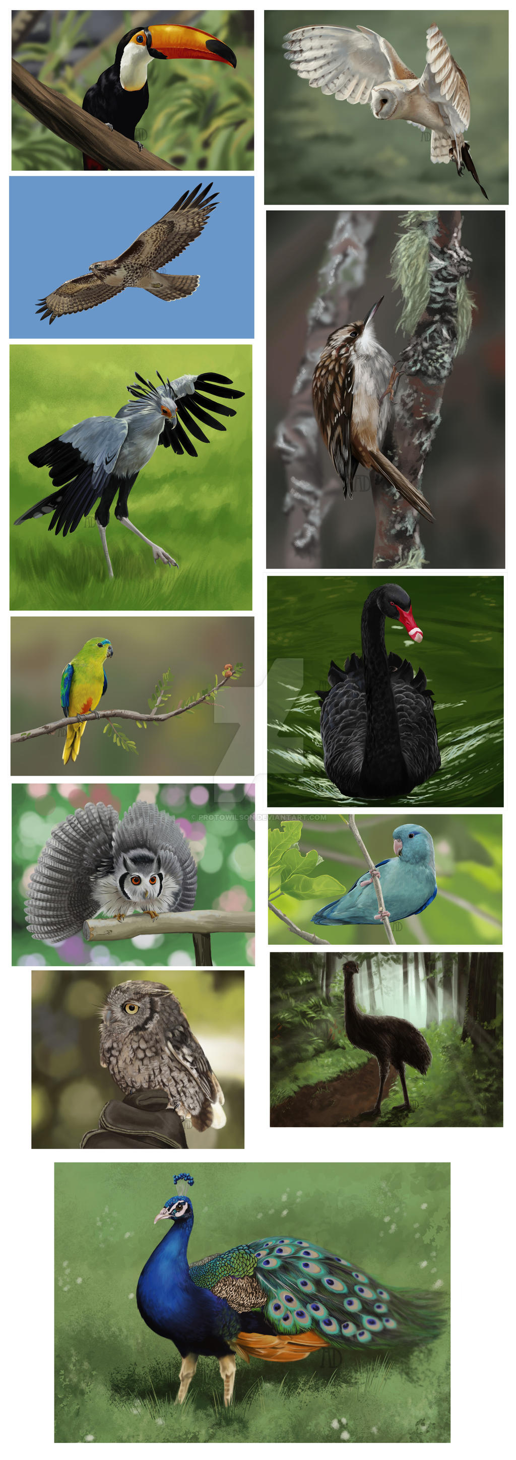 Daily Bird Collation 02 by protowilson