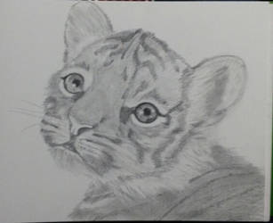 tiger by Prigata1407