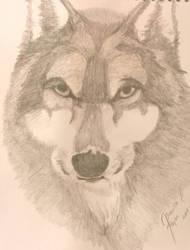 Lobo by Prigata1407