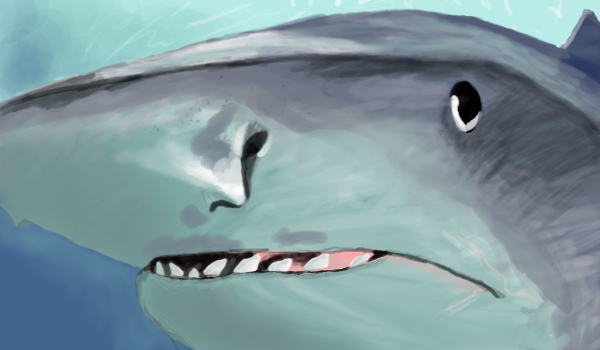 Tiger shark by Fidget-The-Midget