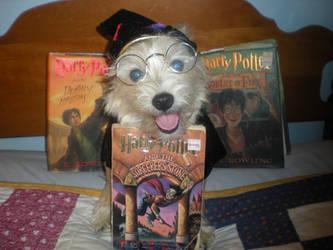 Harry Potter Fan Dog by AvatarRaptor