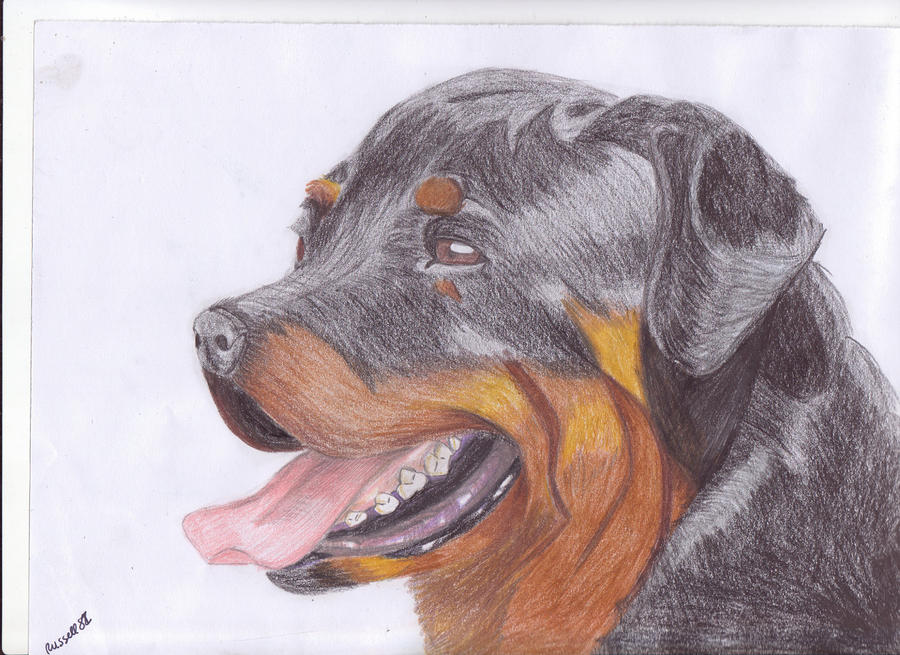 Rottweiler by Russell81