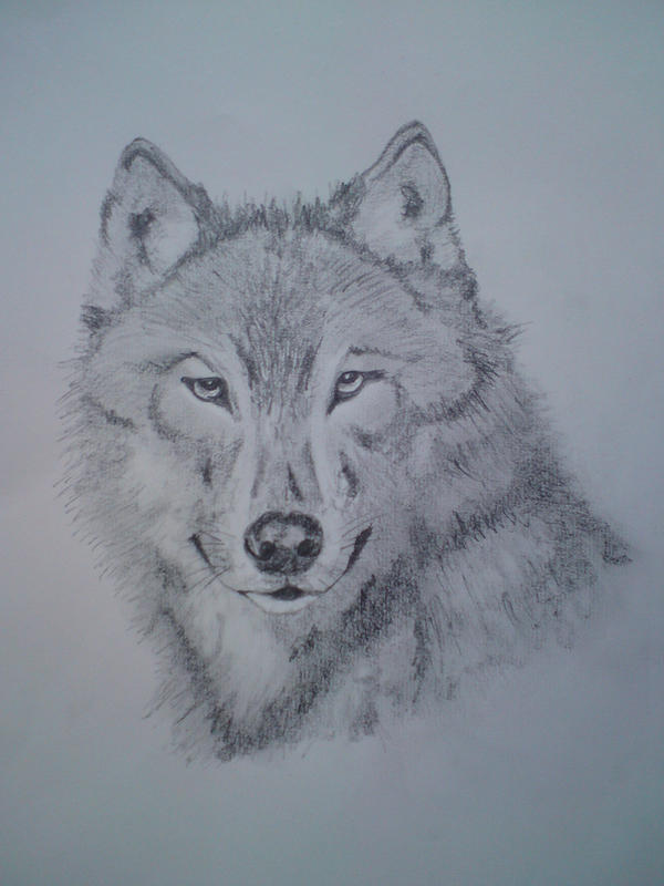 Wolf Face by blackrosetattoo Pencil Drawings Of Wolves Faces
