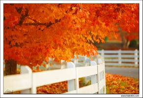 White fence by alwayslovesunshine