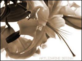 classic lys ::02:: by Artlizarine