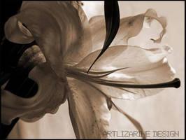 classic lys ::03:: by Artlizarine