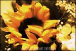 hivernal flowers ::01::