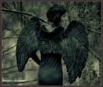 :: Winter's Wings :: 04