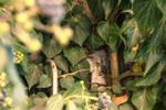 secret window in ivy