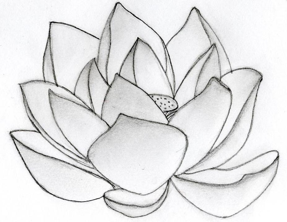 Lotus Flower Art lotus flower design by nikki96