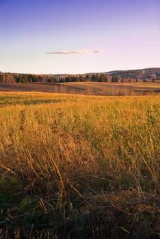 A Warm Field