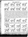 How a Horse Moves