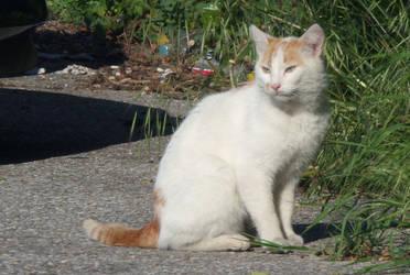 Sad Cat by rattus-bavariae
