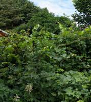 Private Jungle - Partial View
