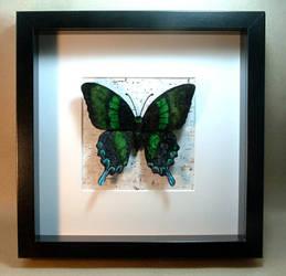 Chenille velvet realistic Papilio blumei butterfly