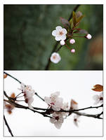 Blossoming by mnoo