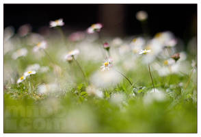 Summer Sunday by mnoo