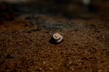 Shell (3 of 1) by Thepieholephotograph