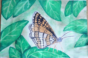 Butterfly by atlantiss505