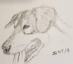 Secret Doggo by StormcallerZef