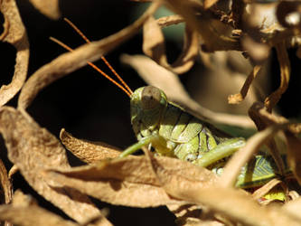 Hiding Hopper by suhleap