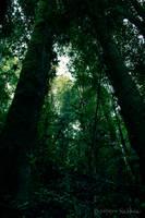 Forest - Ojos del Caburga by EddieMW