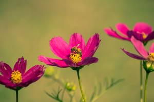 Bees by EddieMW