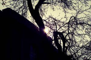 Sunshine by EddieMW