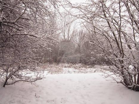 Please enter: Winter Wonderland