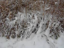 Winter Wonderland - The Spider's Web