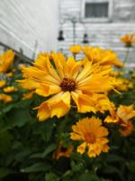 Farm Photos, Bloom by jugga-lizzle