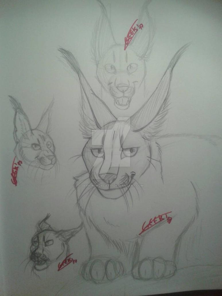 Caracals sketches by Geek-NerdyCat11