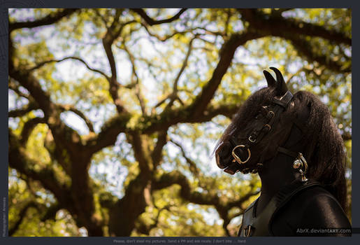 Do horses eat Spanish Moss?