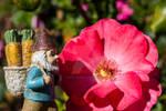 Rose Gnome