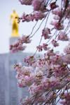 Oregon Cherries II