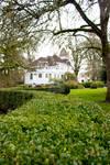 Victorian Hedge I
