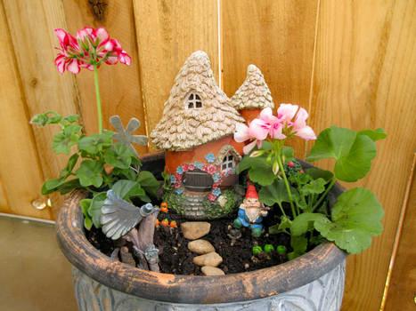 Geranium Gnome 02