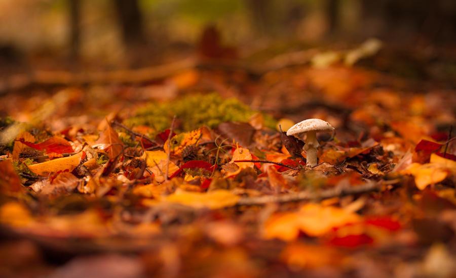 Dear autumn... by elariand