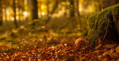 Amanita muscaria by elariand
