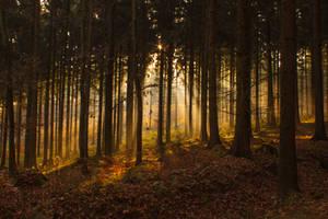 Mystic Forest by elariand