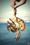Dead Krabby