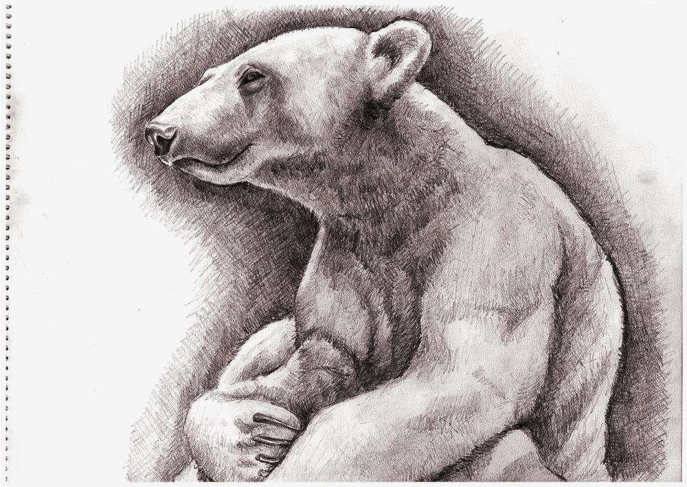 Knut by keiross