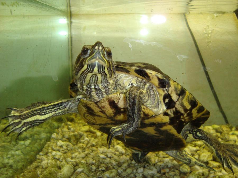 turtle by SaMUnhigh