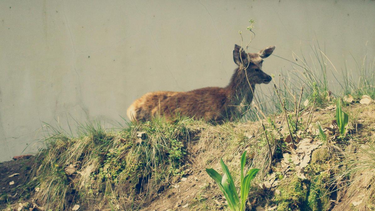 Deers by RsNemesis